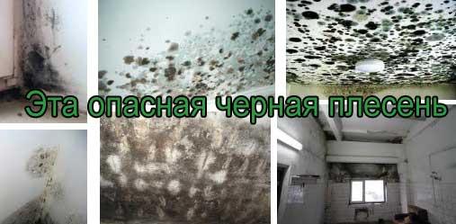 грибок и плесень на бетоне