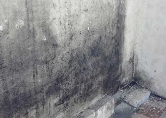 плесень на бетонной стене
